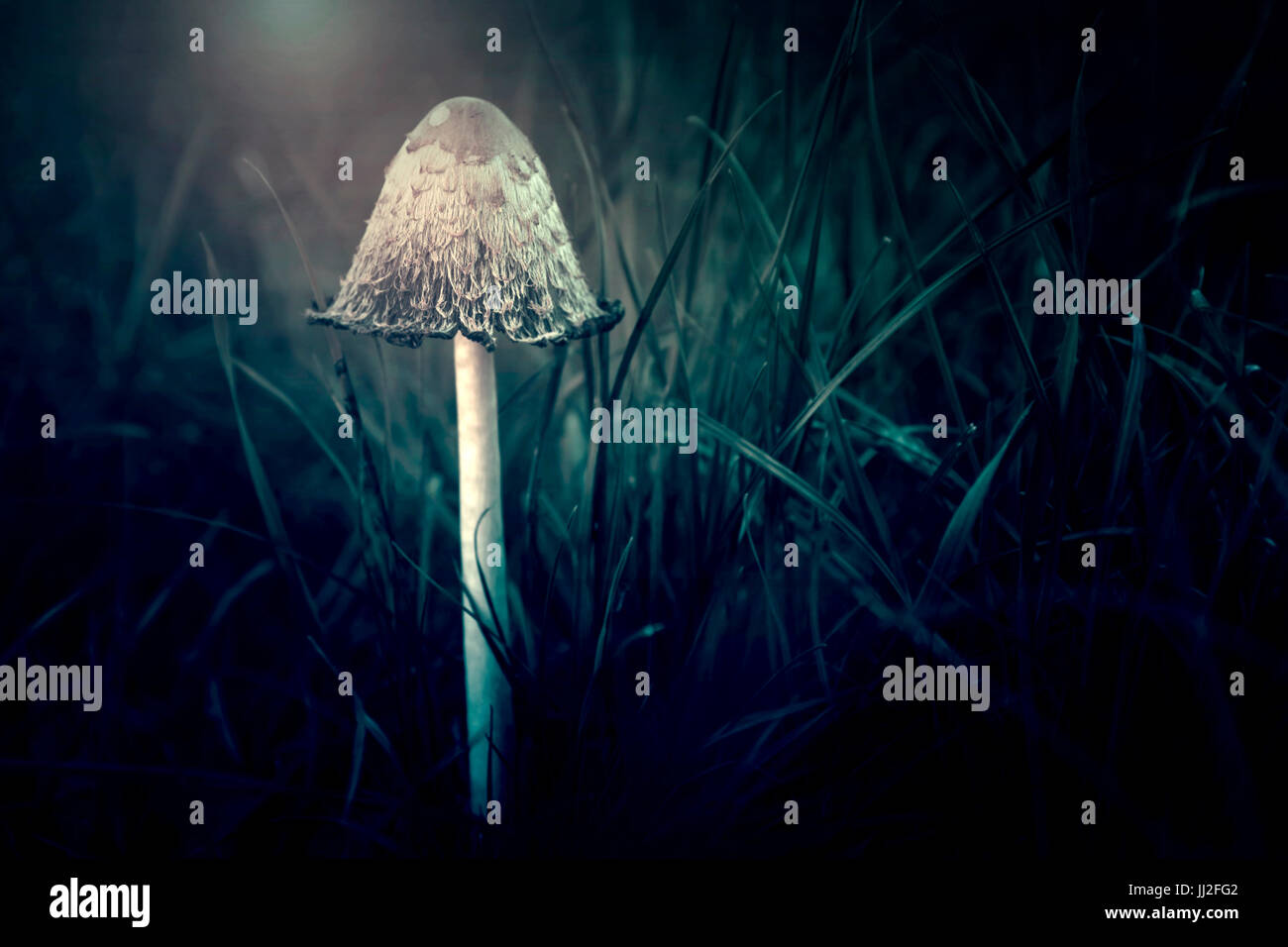 Mushroom in forest - Stock Image