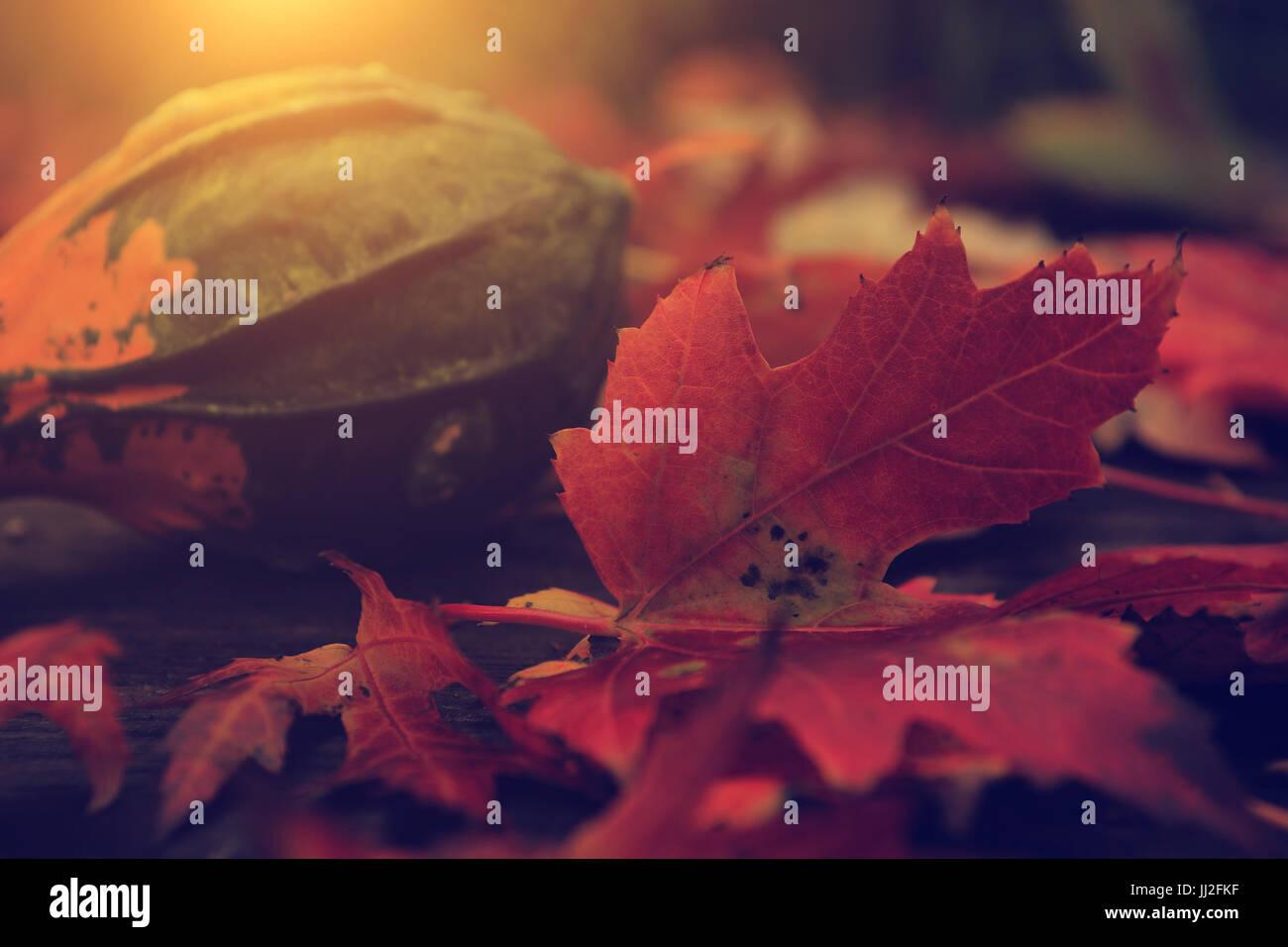 Vintage photo of autumn still life - Stock Image