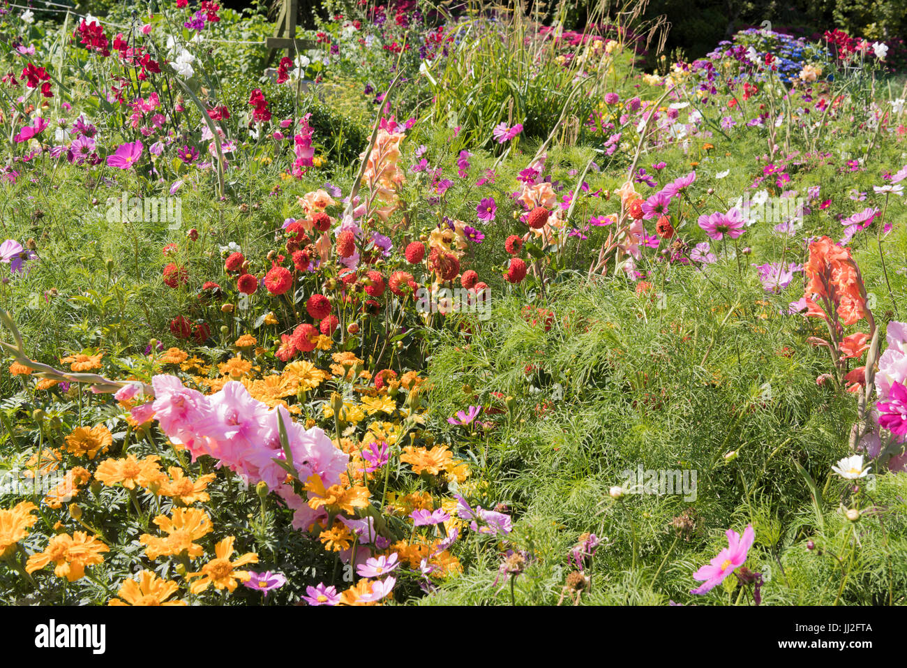 Pretty Cottage Garden Growing A Variety Of Annual And Biannual