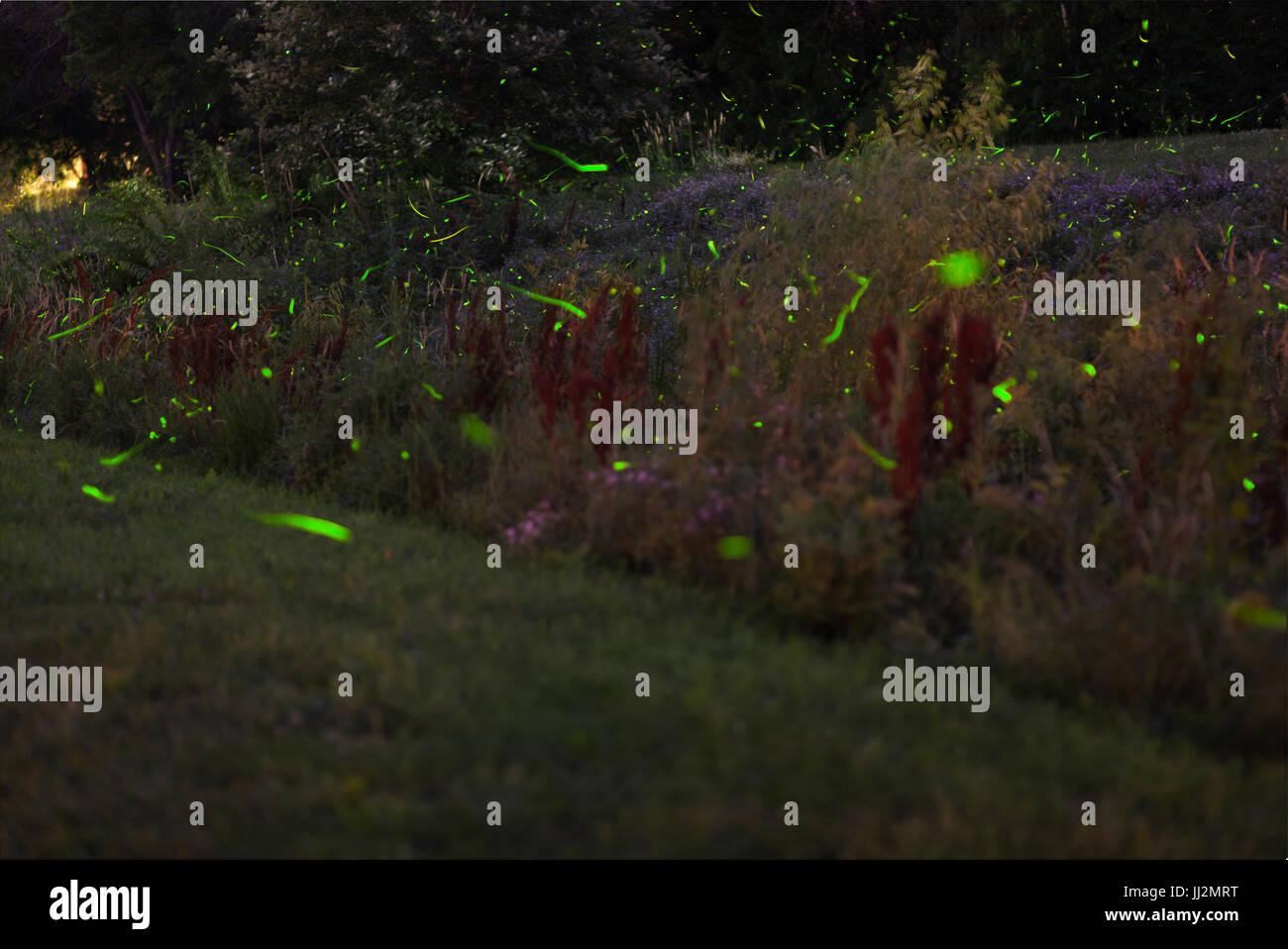 Fireflies on a creek verge - Stock Image