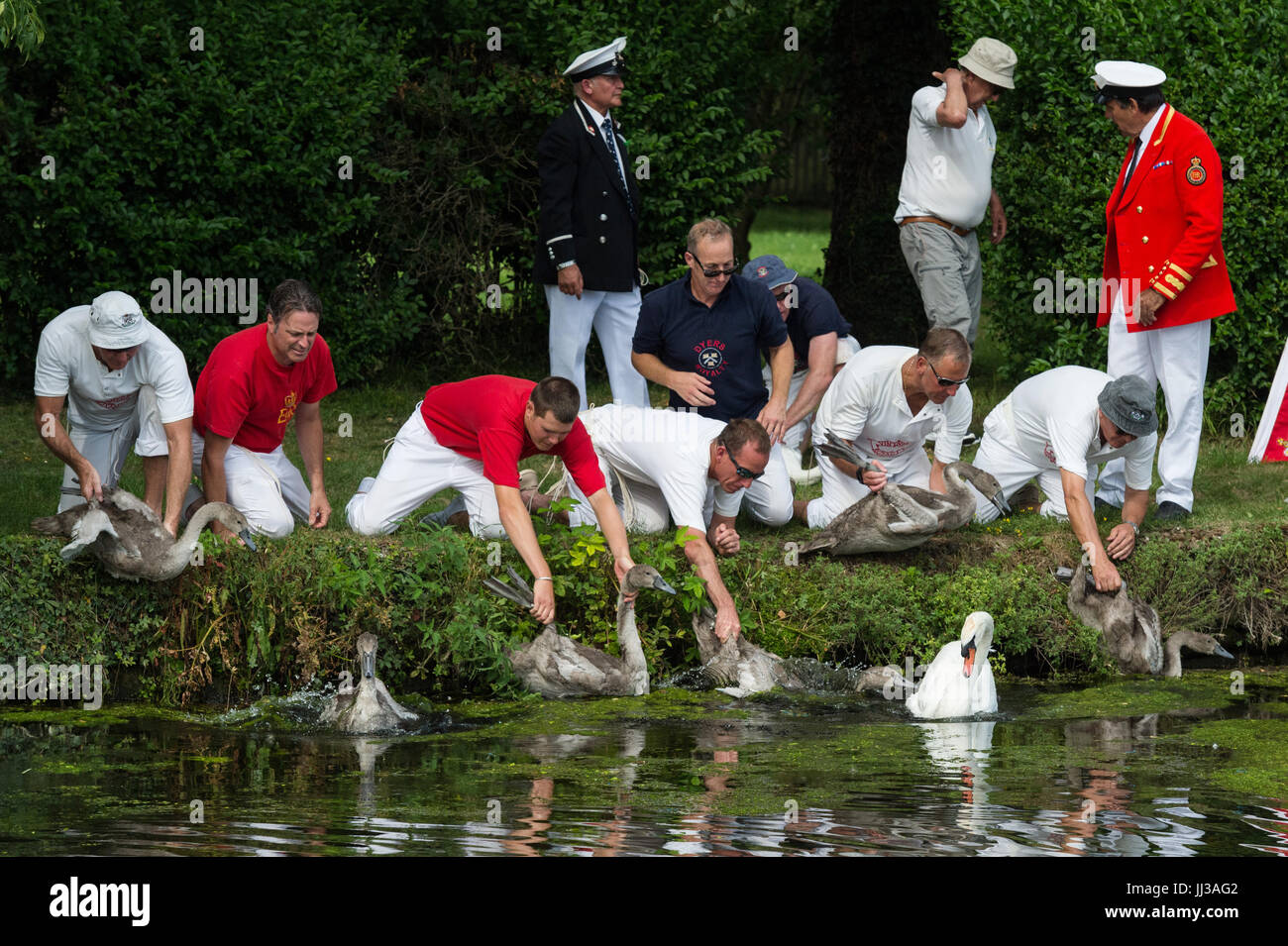 London, UK. 17th July, 2017. Swan Upping takes place on the River Thames near Windsor, Berkshire, UK. The annual - Stock Image