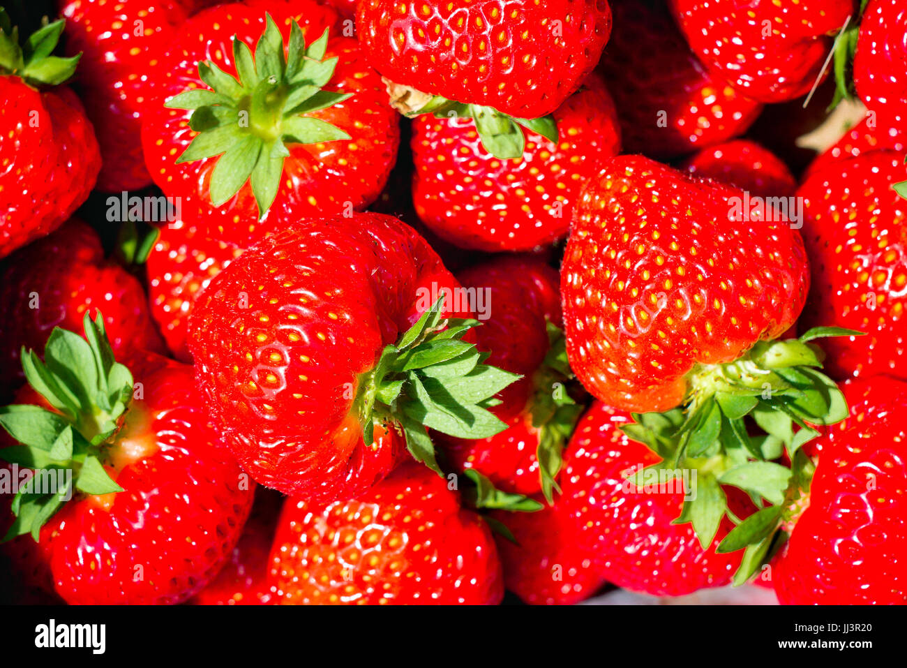 Full framed strawberry in a box - Stock Image