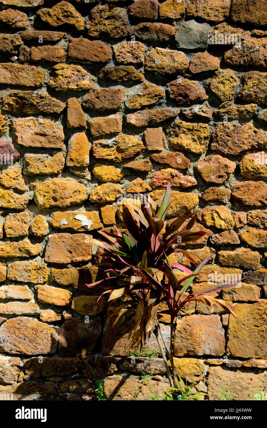 A Stone wall built by former prisoners of the notorius penal colony in French Guiana. - Stock Image