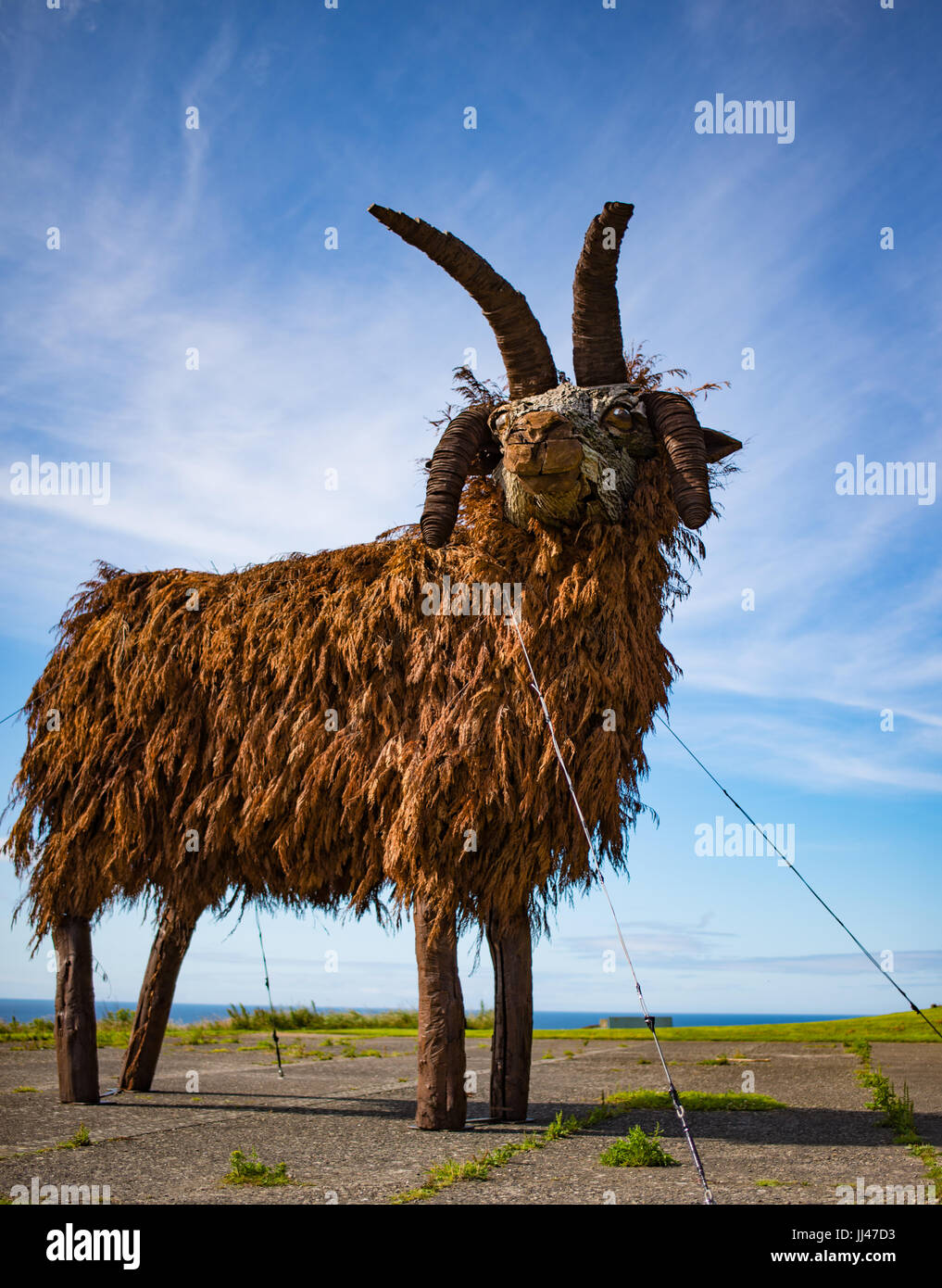 Manx Loaghtan sheep made of wood and conifer branches - Stock Image