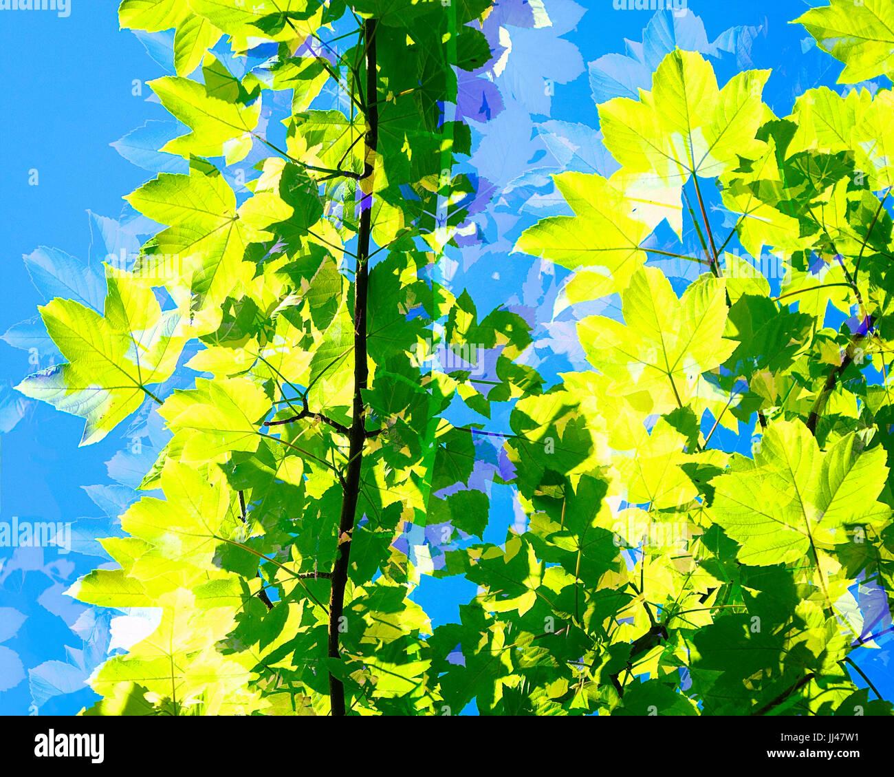 DIGITAL ART: Summertime - Stock Image