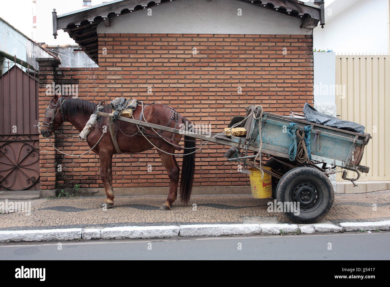 Horse, Coach, Brazil Stock Photo