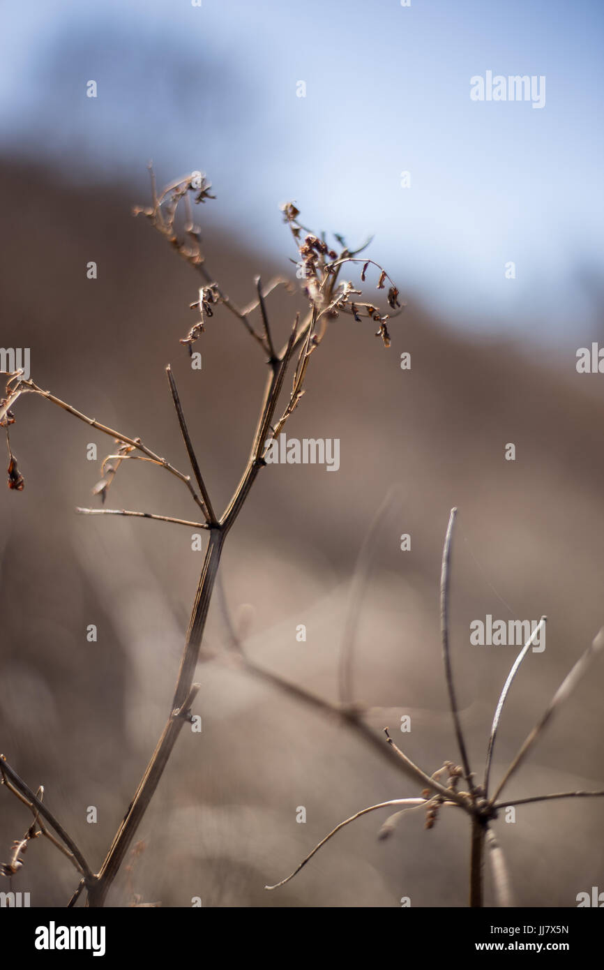 Plant with blurred background Stock Photo