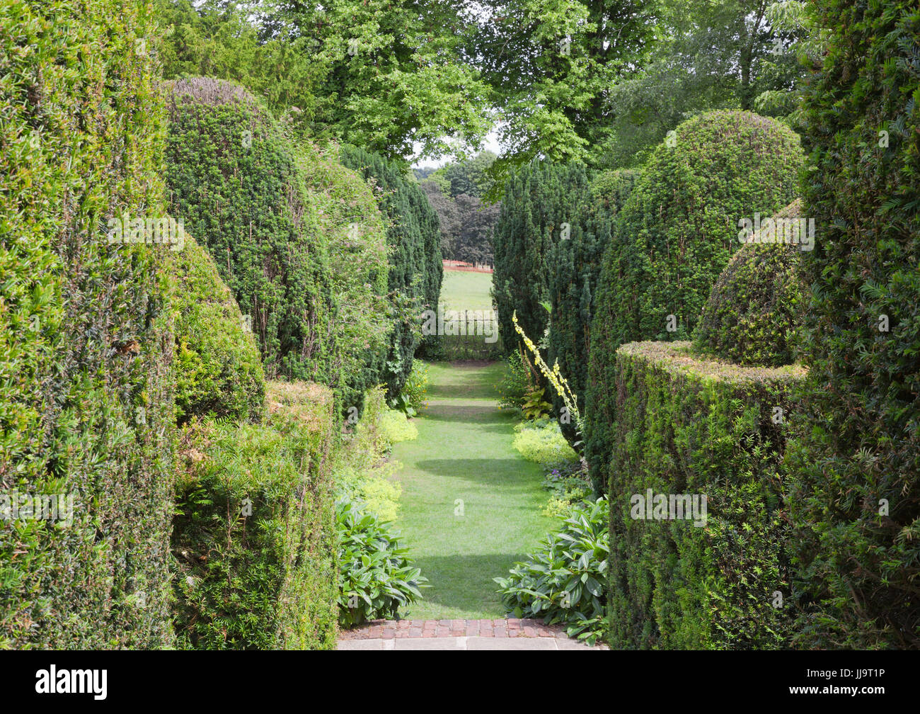 Walking path through a wall of trimmed green hedge in a topiary garden . - Stock Image