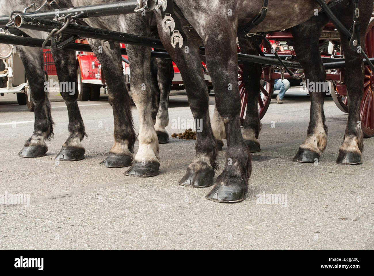 A team of horse's hoofs, stationary on a roadway. - Stock Image