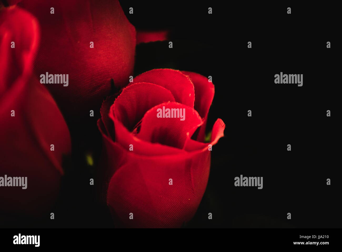 Bunch Of Lovely Rose Flowers On A Dark Background Stock Photo