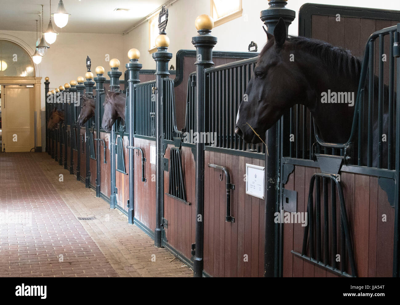 Horses at the Royal Stables (Koninklijke Stallen) during the Summer opening 2017 of the Royal Stables in The Hague, - Stock Image