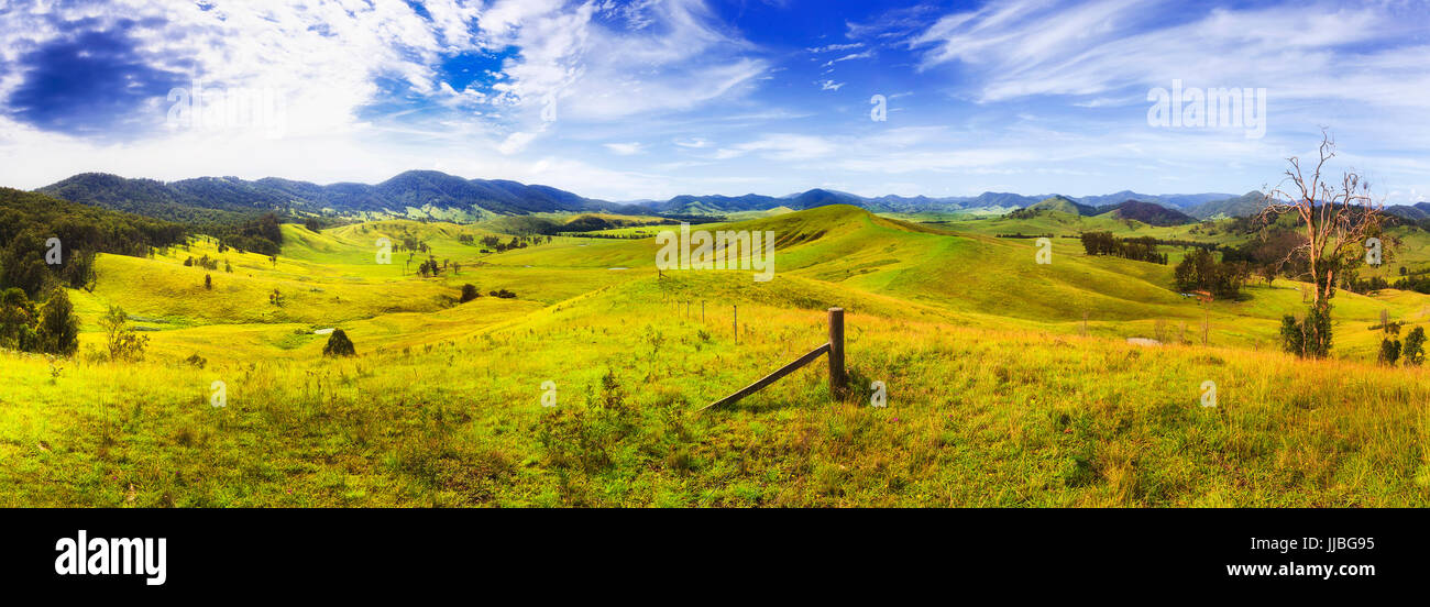 Endless lush green grass pasture of australian rural agricultural farms to grow cattle, bulls, cows and sheep in - Stock Image