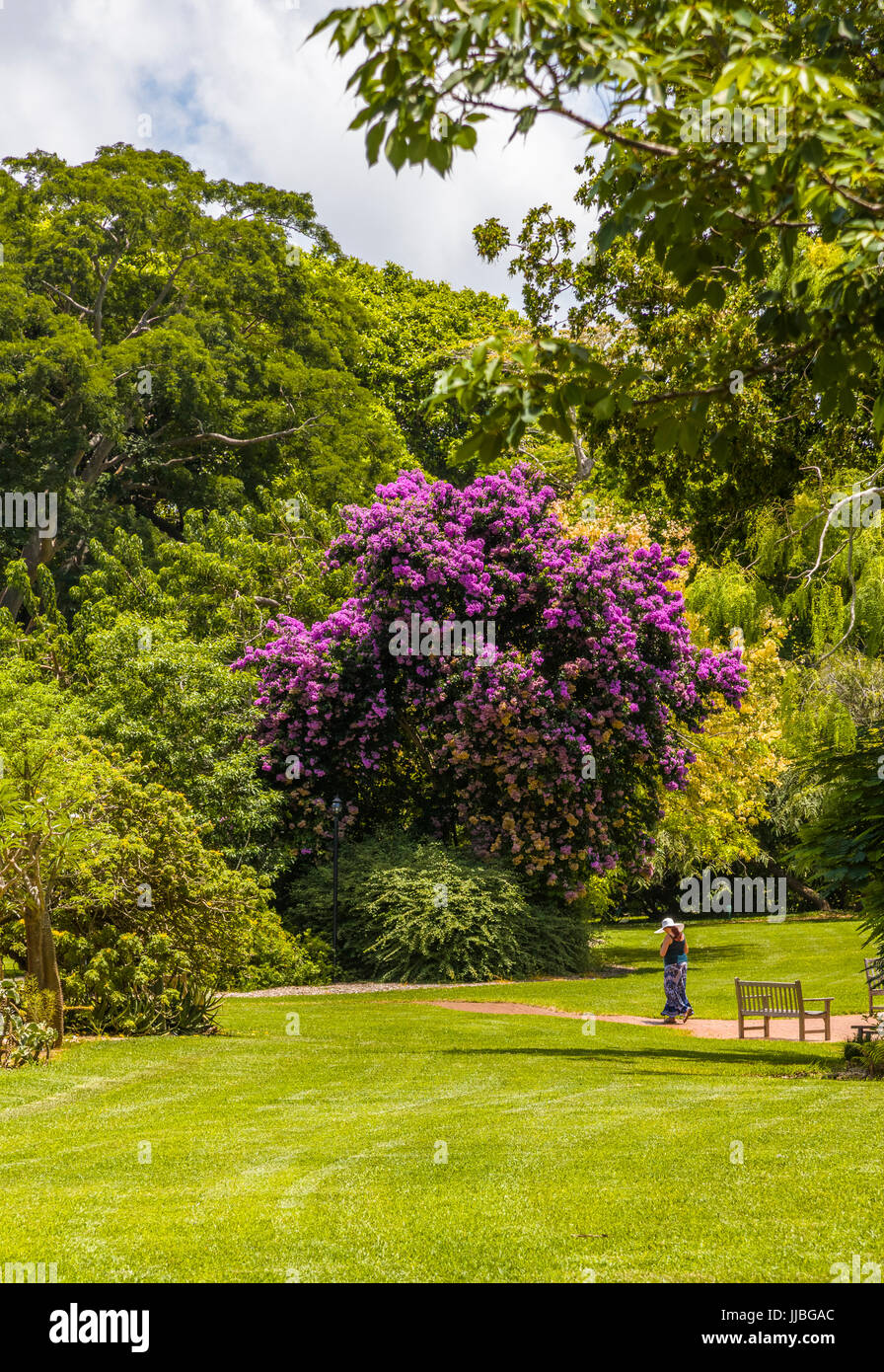 Fairchild stock photos fairchild stock images alamy - Fairchild tropical botanic garden ...