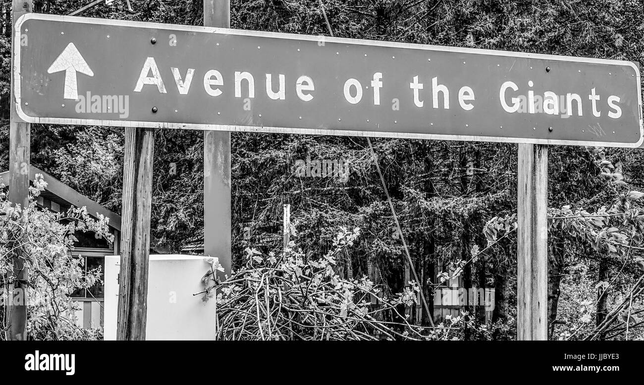Street sign Avenue of the Giants in the Redwoods - Stock Image
