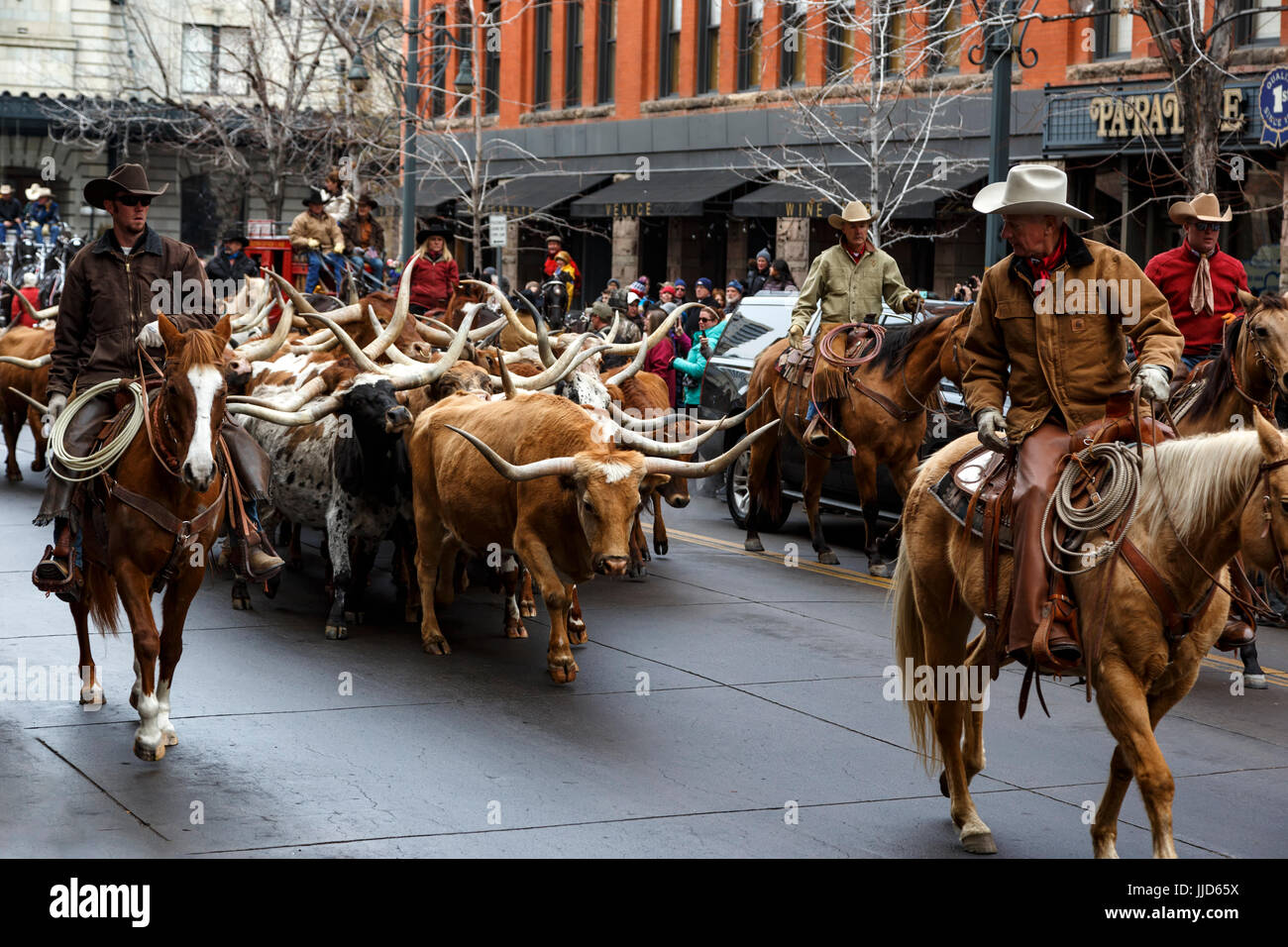 Longhorns herded by cowboys, National Western Stock Show Kick-Off Parade, Denver, Colorado USA - Stock Image