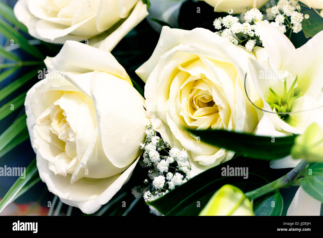 Bouquet with white roses. Close-up. - Stock Image