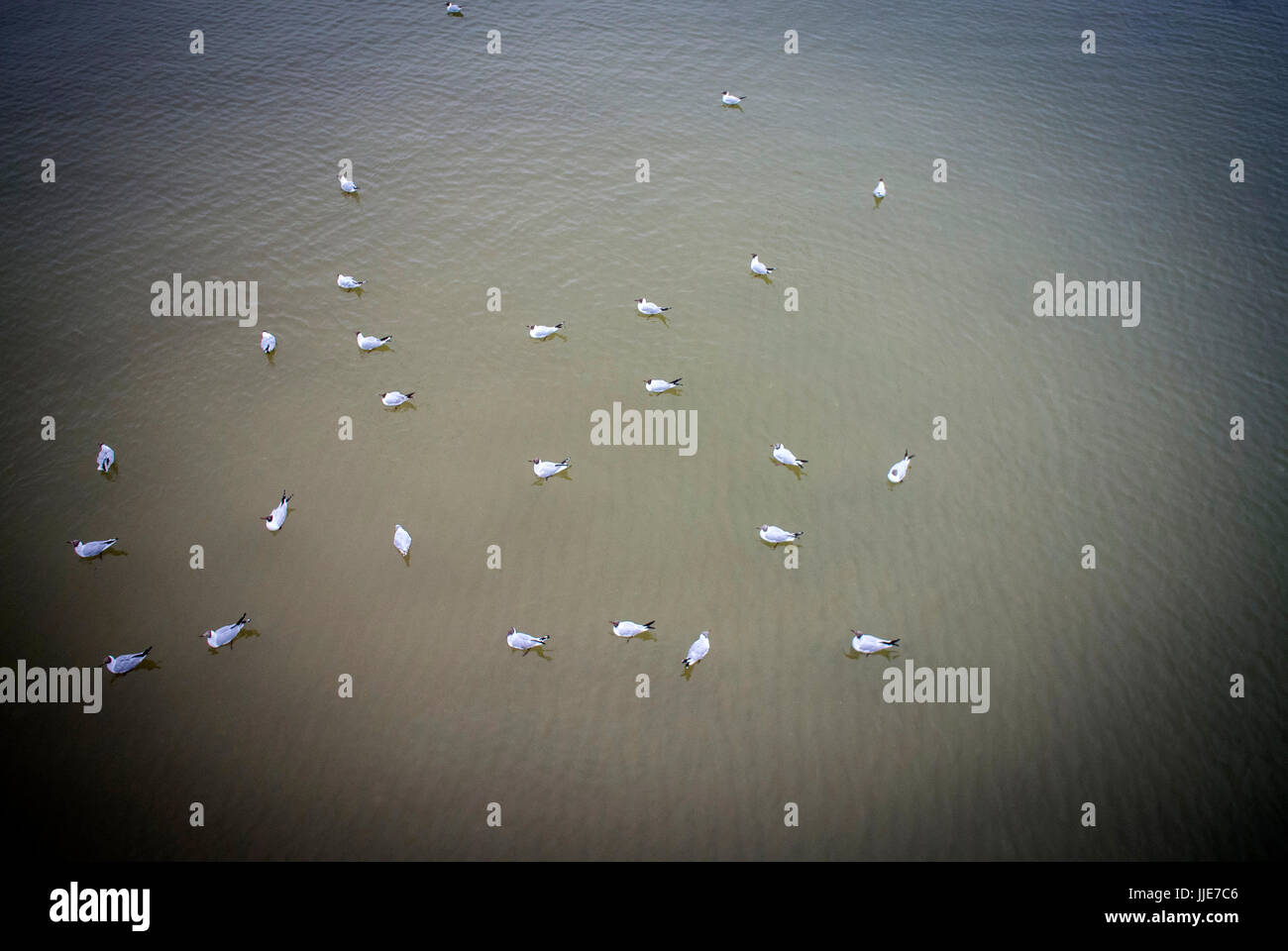 Seagulls at the Spa seaside town of Zinnowitz Mecklenburg-Vorpommern on the northern German island of Usedom on - Stock Image