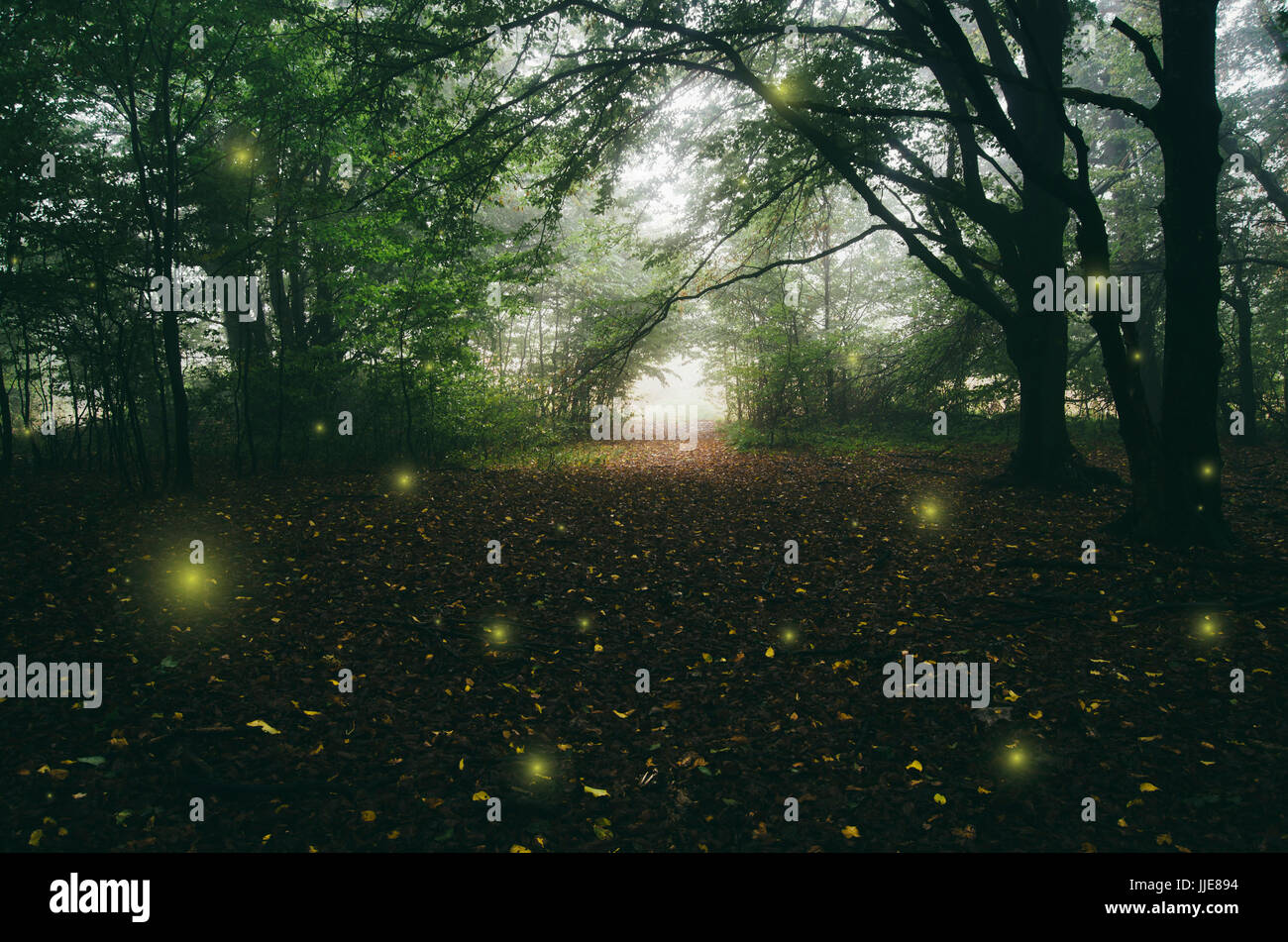 magical forest path with surreal sparkles fantasy landscape - Stock Image