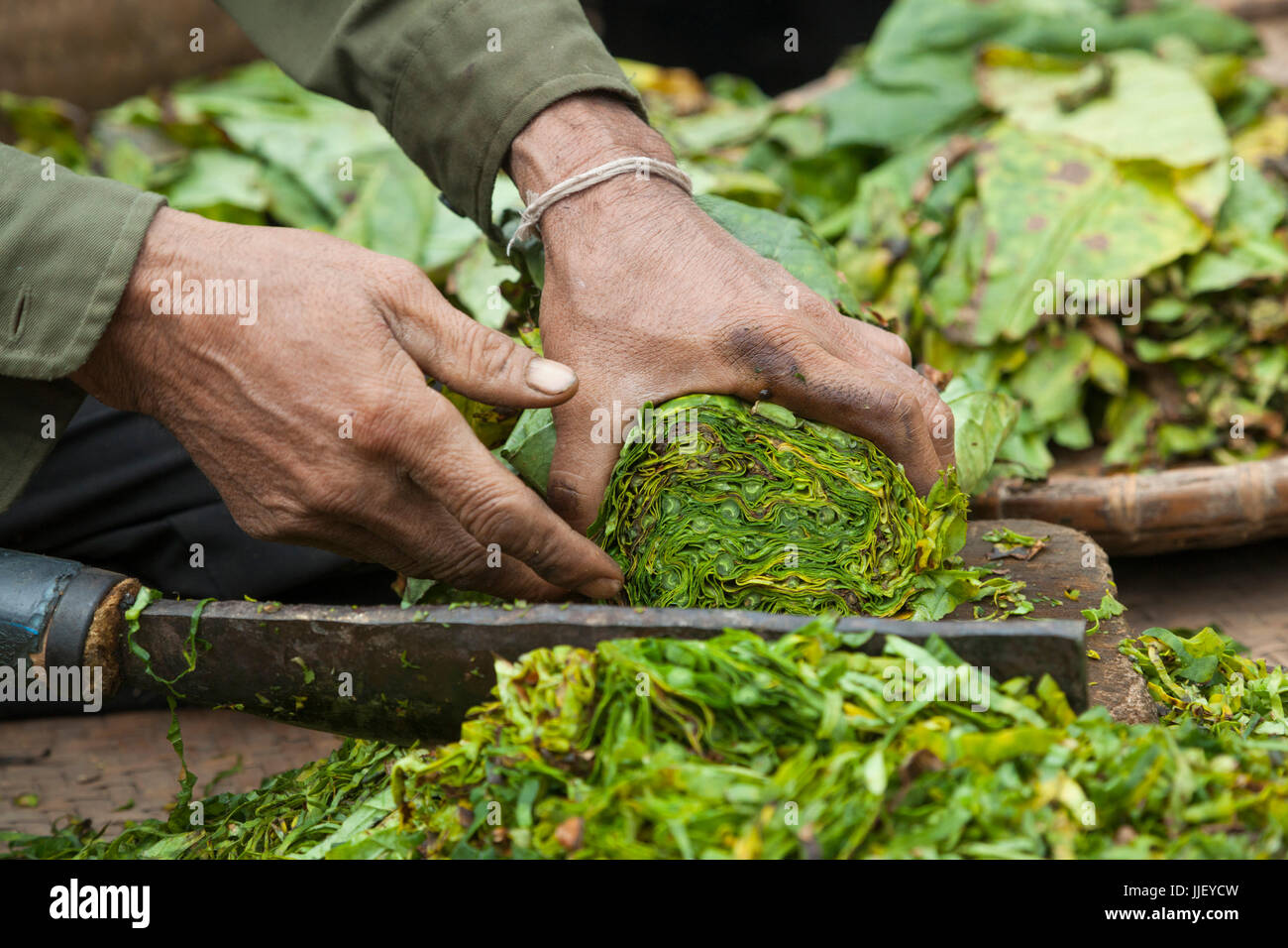 A man chops tobacco leaves into strips in Ban Phon Hom, Laos. - Stock Image