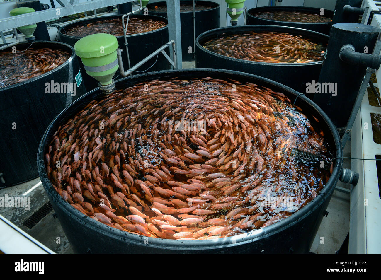 how to start your own fish farm