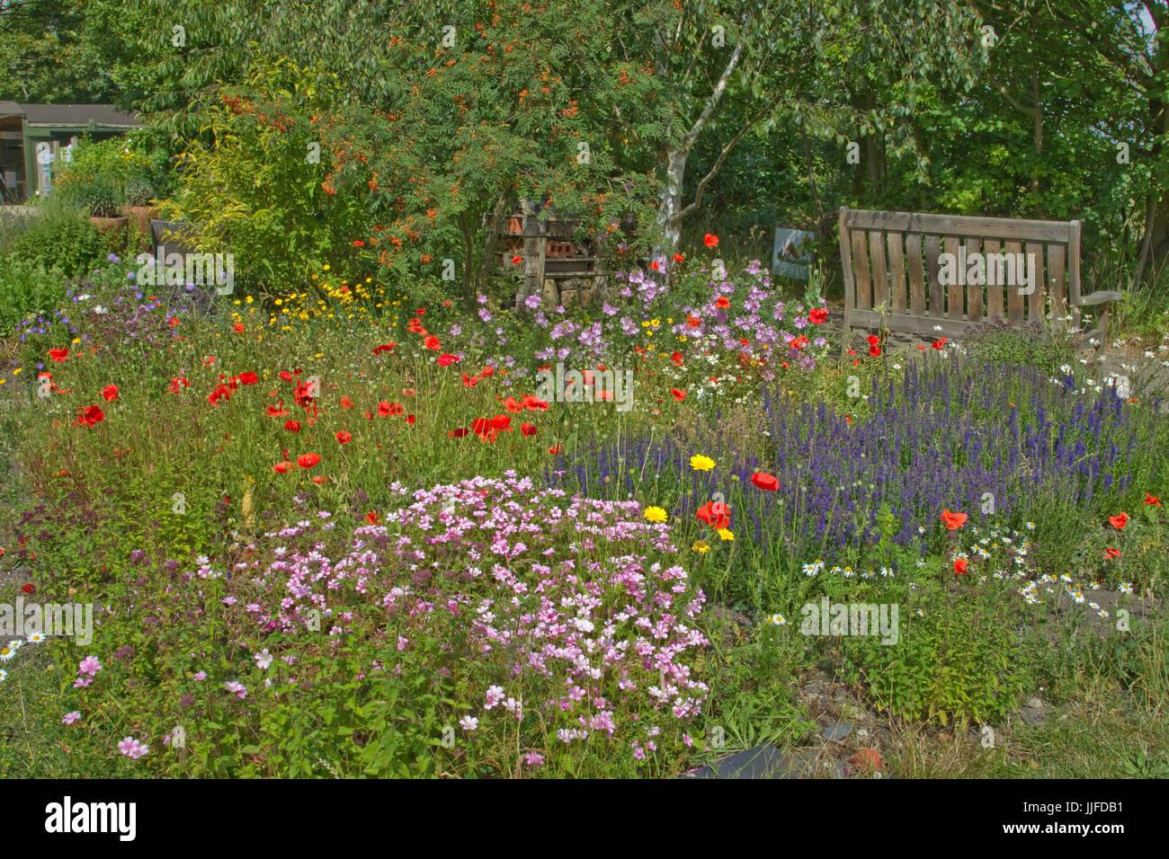 Wild summer flowers in a garden - Stock Image