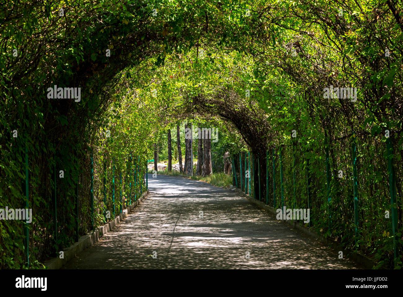 Green Tunnel In The Botanical Garden Of Yerevan Armenia Stock Photo Alamy