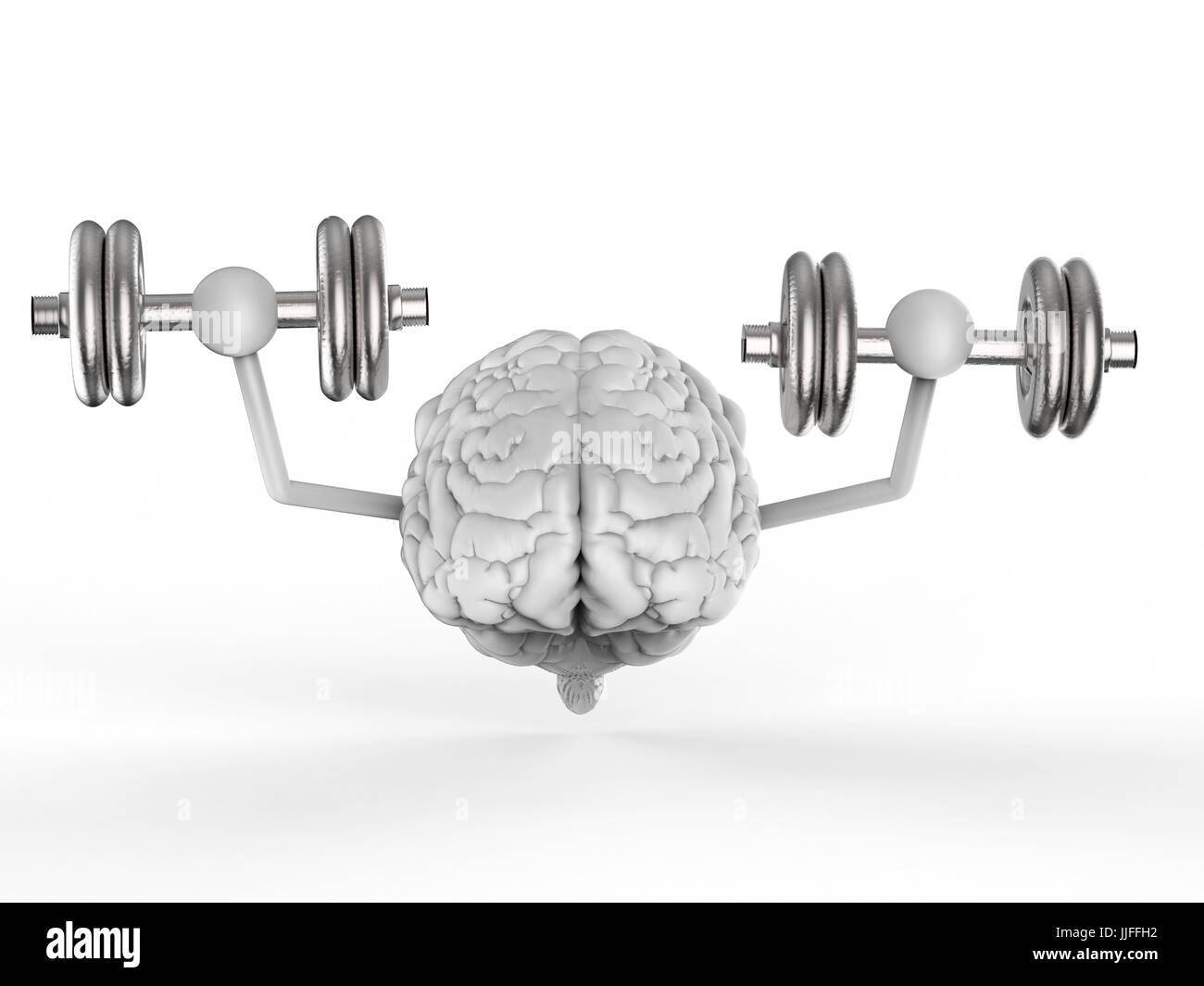 3d rendering brain holding dumbbells on white background - Stock Image