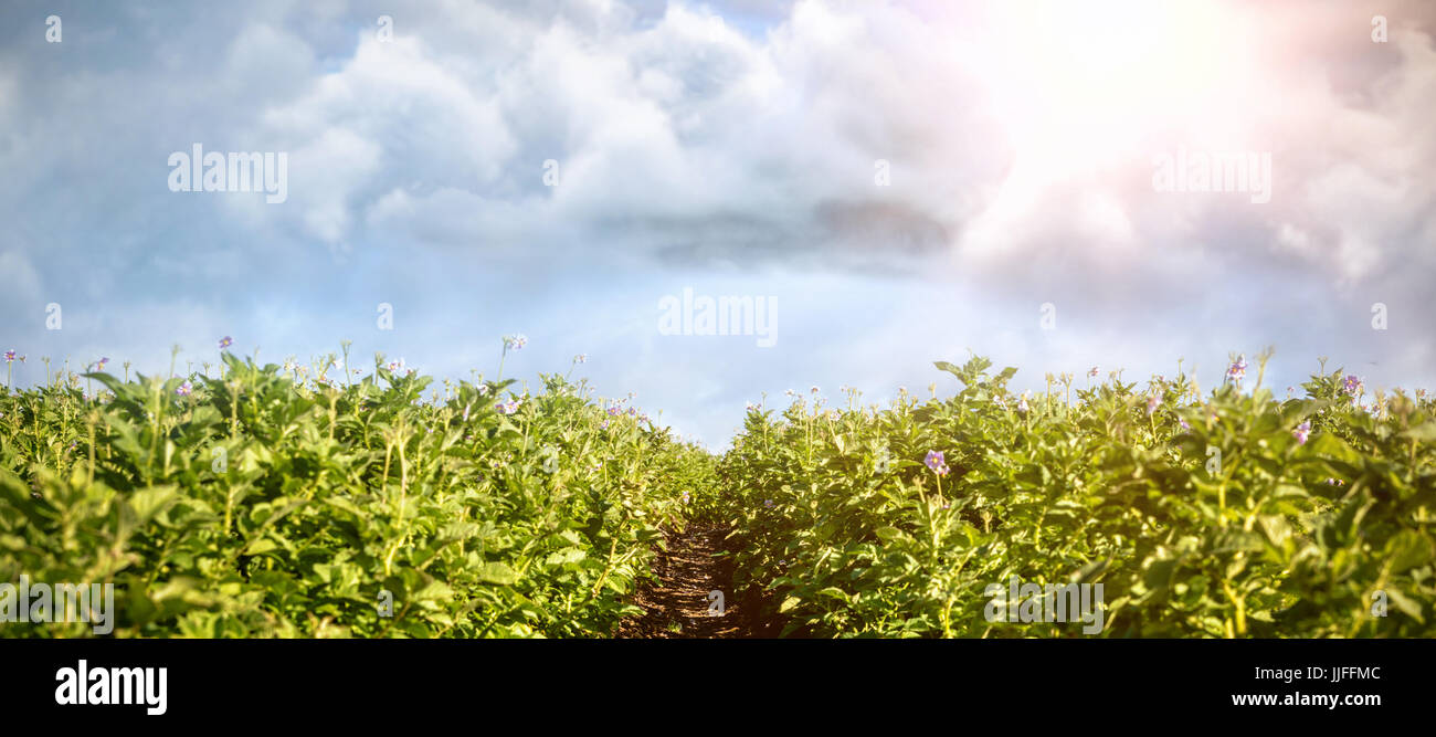 Vector image of cloud  against filed on a sunny day - Stock Image