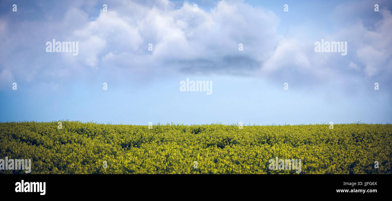 Vector image of cloud  against flock of bird flying over field - Stock Image