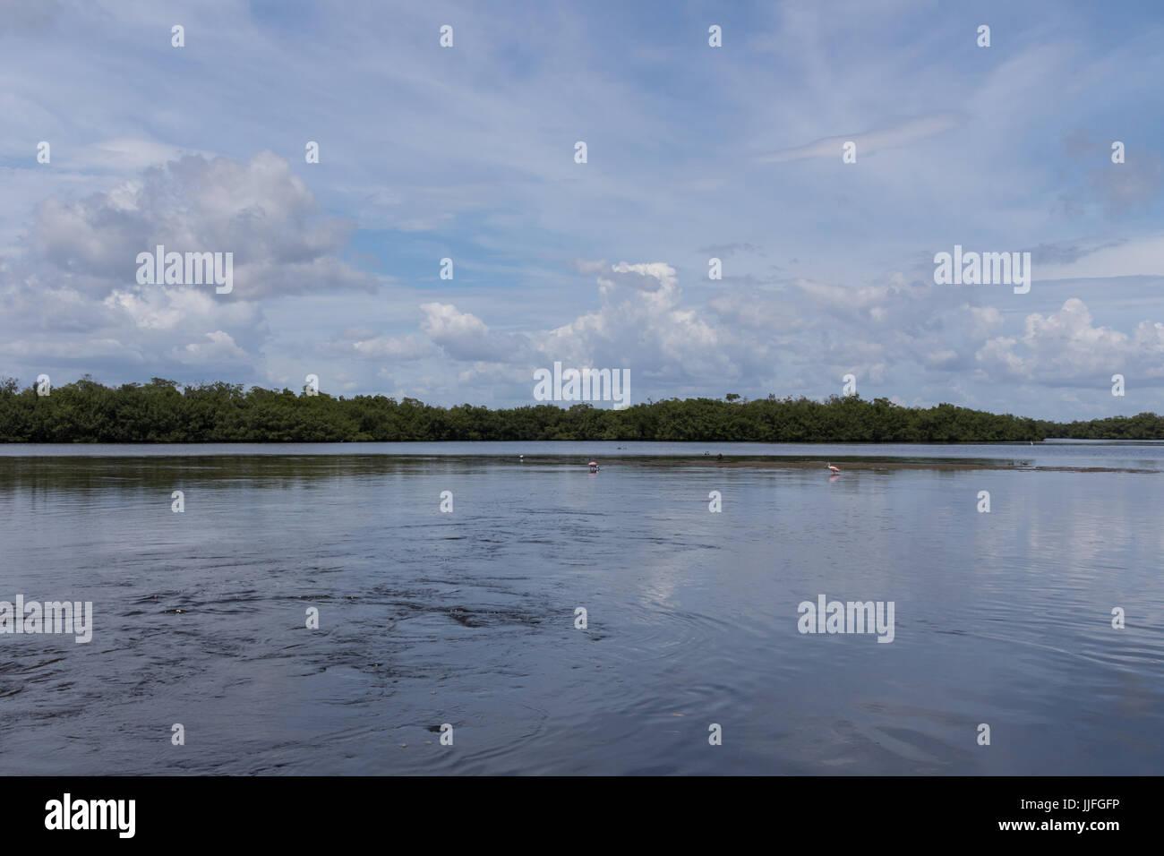 Landscape, J.N. ''Ding'' Darling National Wildlife Refuge, Sanibel Island, Florida, USA - Stock Image