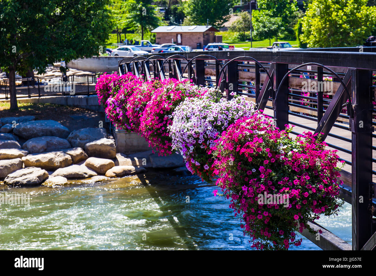 Walking Bridge With Colorful Flowers Over Truckee River - Stock Image