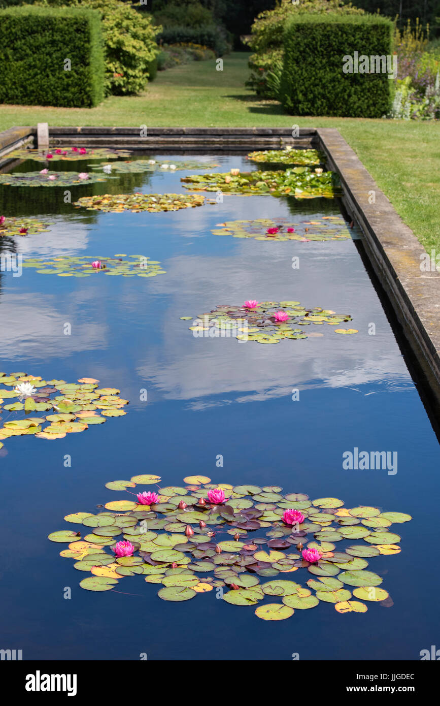 Waterlily pond in Waterperry Gardens, Near Oxford, Oxfordshire, England - Stock Image