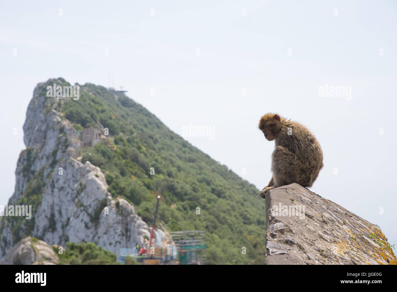 view of the rock in gibraltar, with barbary macaque in foreground looking a bit wistful - Stock Image