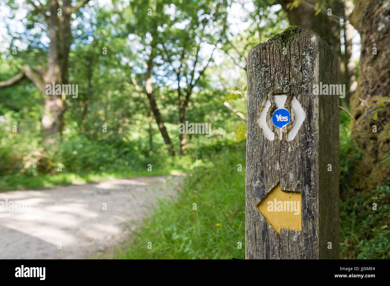 Scottish Independence Referendum - concept - yes sticker on West Highland Way long distance route marker - Stock Image