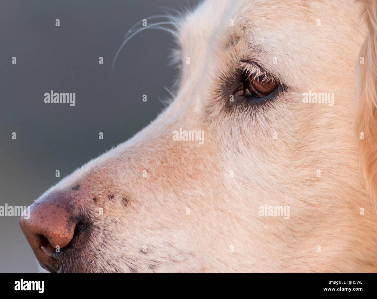 Dog Eyelashes Stock Photos Dog Eyelashes Stock Images Alamy