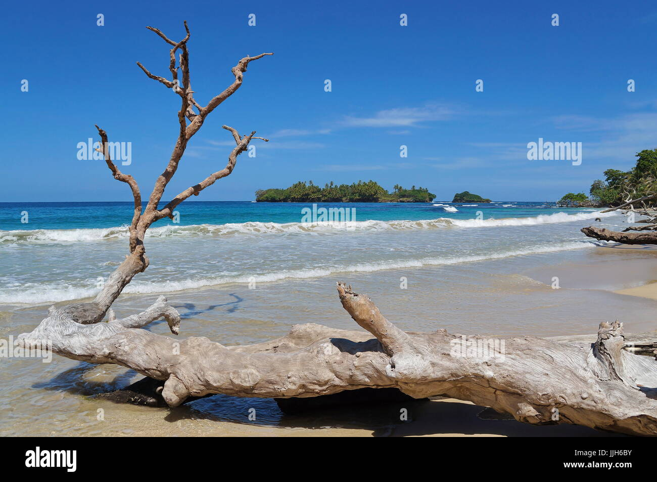 Large driftwood tree trunk on a sandy seashore with tropical island in background, Caribbean sea, Bastimentos, Bocas - Stock Image