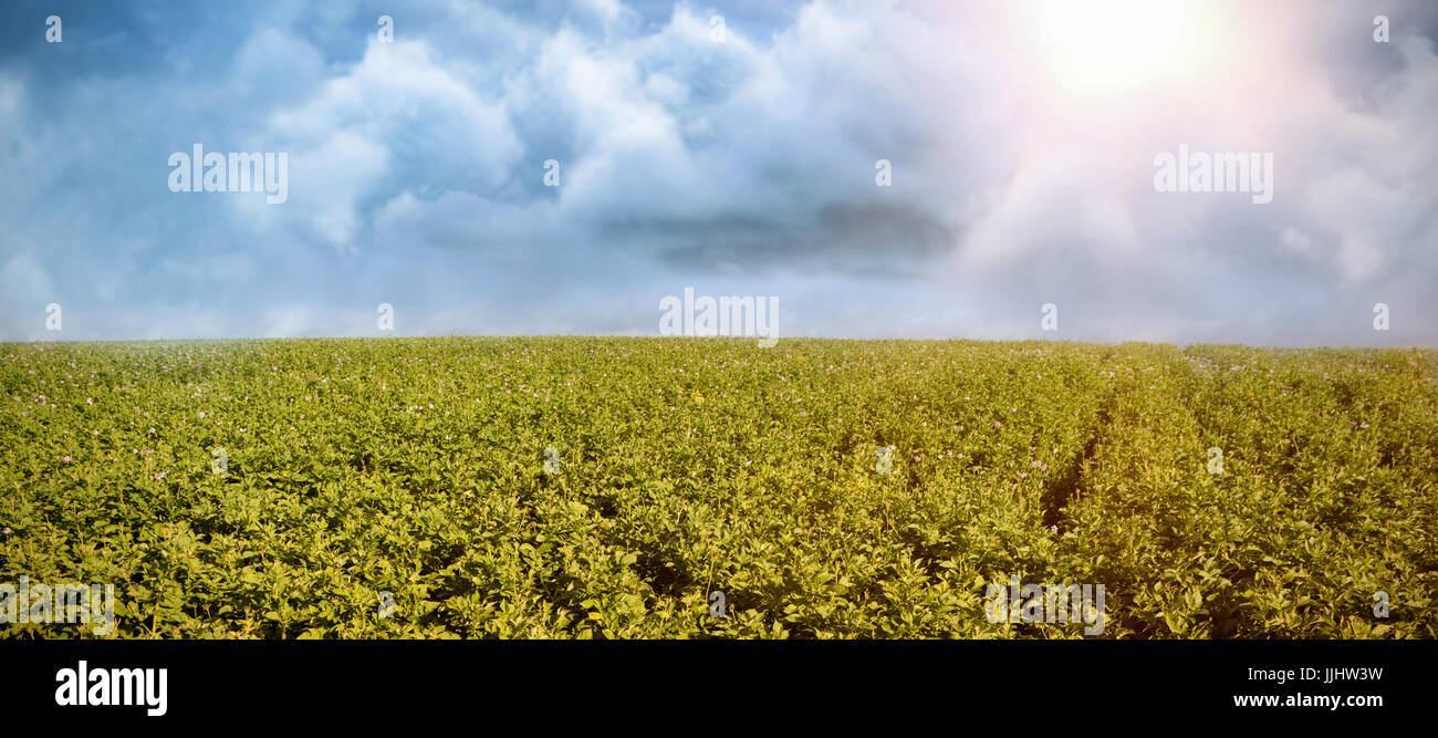 Vector image of cloud  against lettuce field - Stock Image
