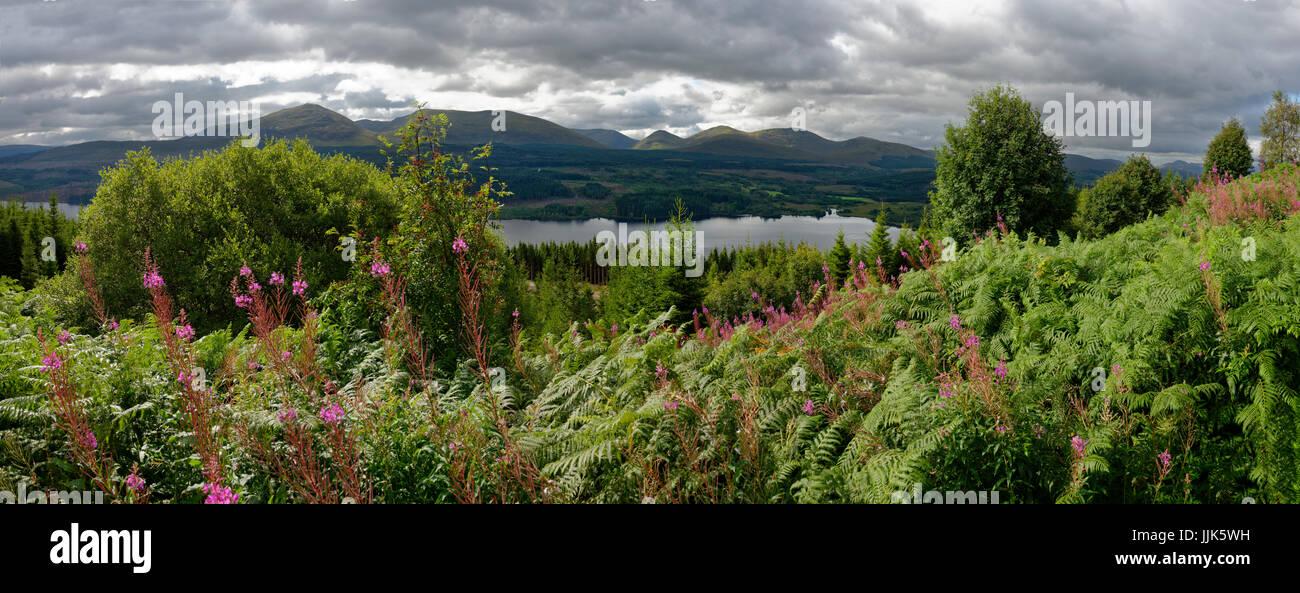 Vegetation around Loch Garry, Highlands, Scotland, United Kingdom Stock Photo