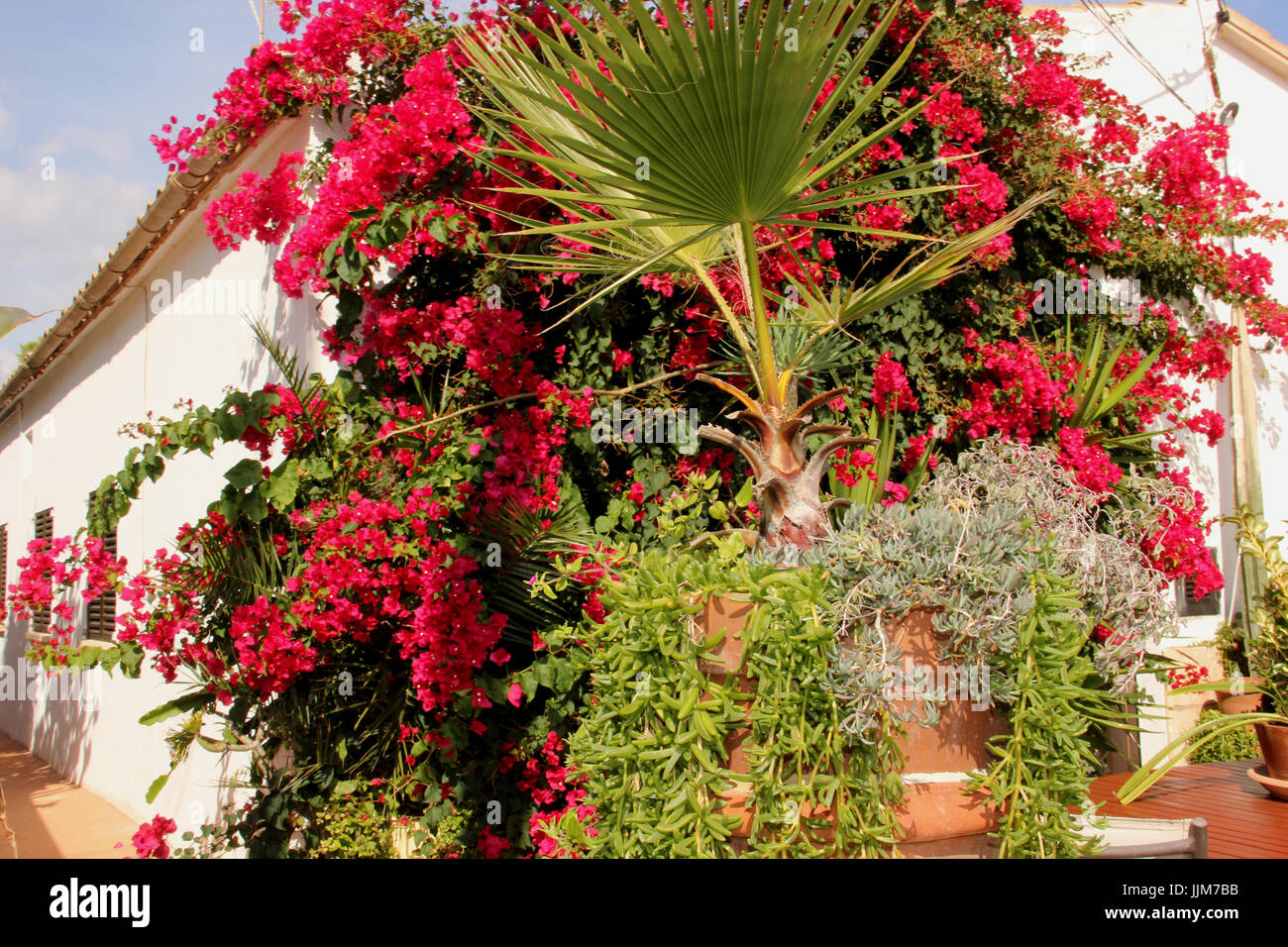flowering bougainvillea and mediterranian plants at a house - Stock Image