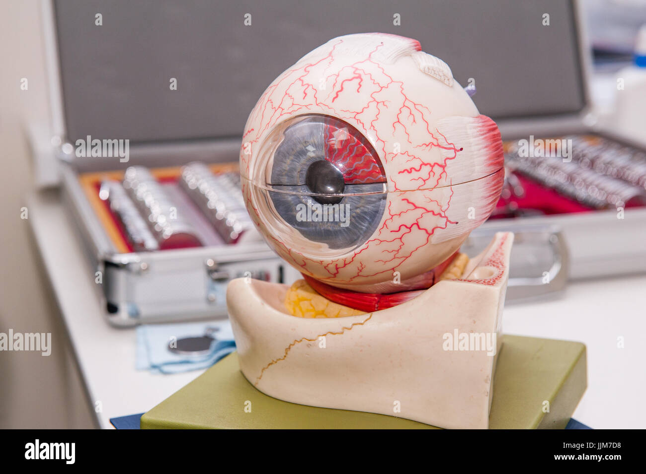 Human eye anatomy model on the background of set of corrective lens ...