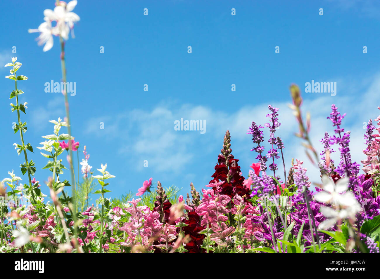 Greeting Card With Colorful Flower Meadow Summer Flowers Pink