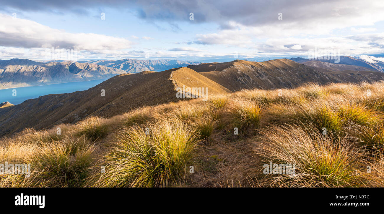 Mountain ridge, overgrown with grass, lake surrounded by mountains, Lake Hawea, view from Isthmus Peak, Otago, South - Stock Image