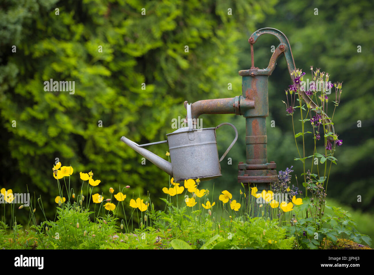 Water pump and watering can. - Stock Image