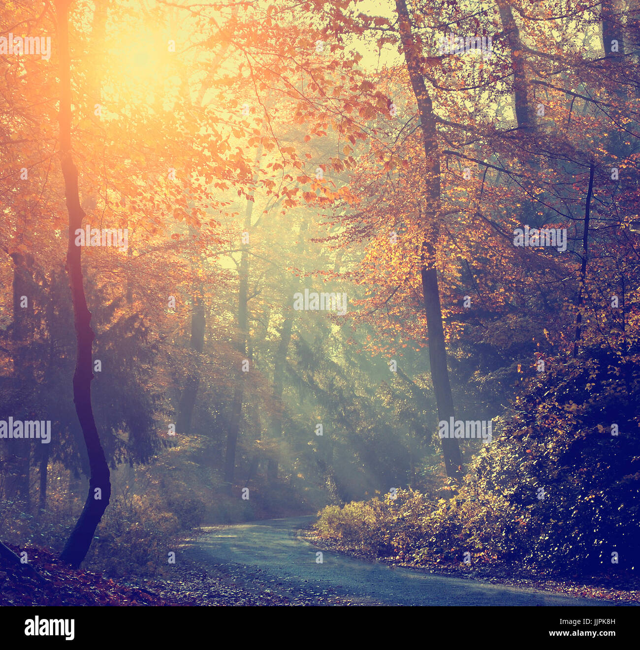 Autumn forest and road in sunrise - Stock Image