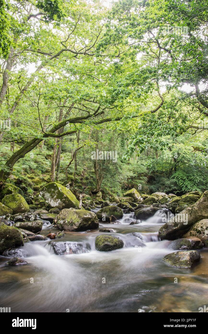 River Plym flowing through ancient woodland - Stock Image