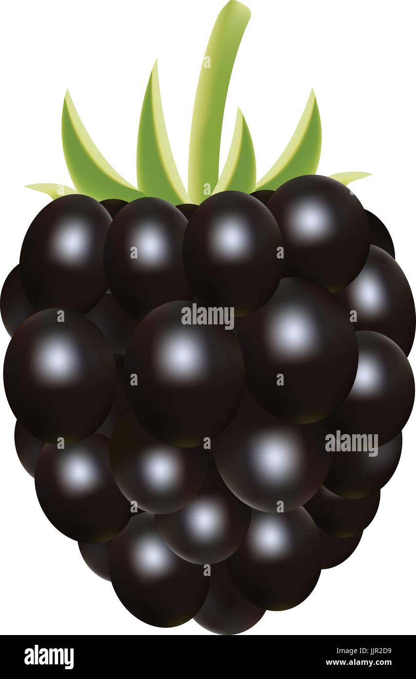 Blackberry. Sweet Fruit. Forest Berry Isolated On A White Background. - Stock Vector