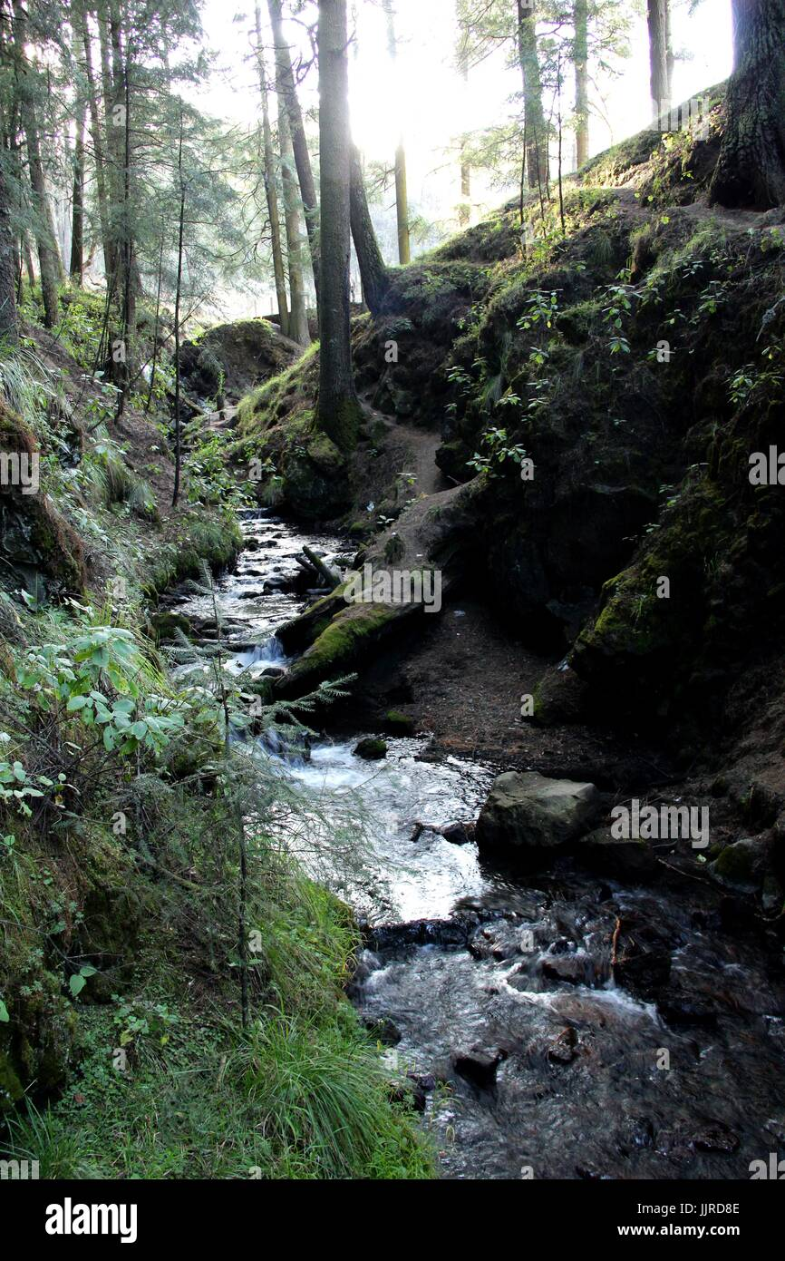 Forest in the Valley of Mexico - Stock Image