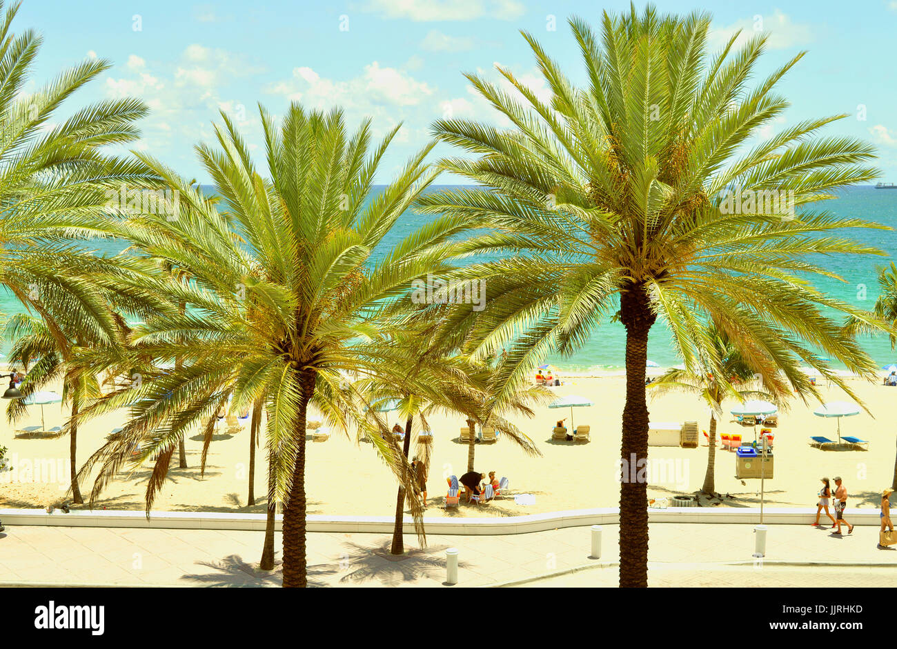 Palm trees on Fort Lauderdale Beach Stock Photo