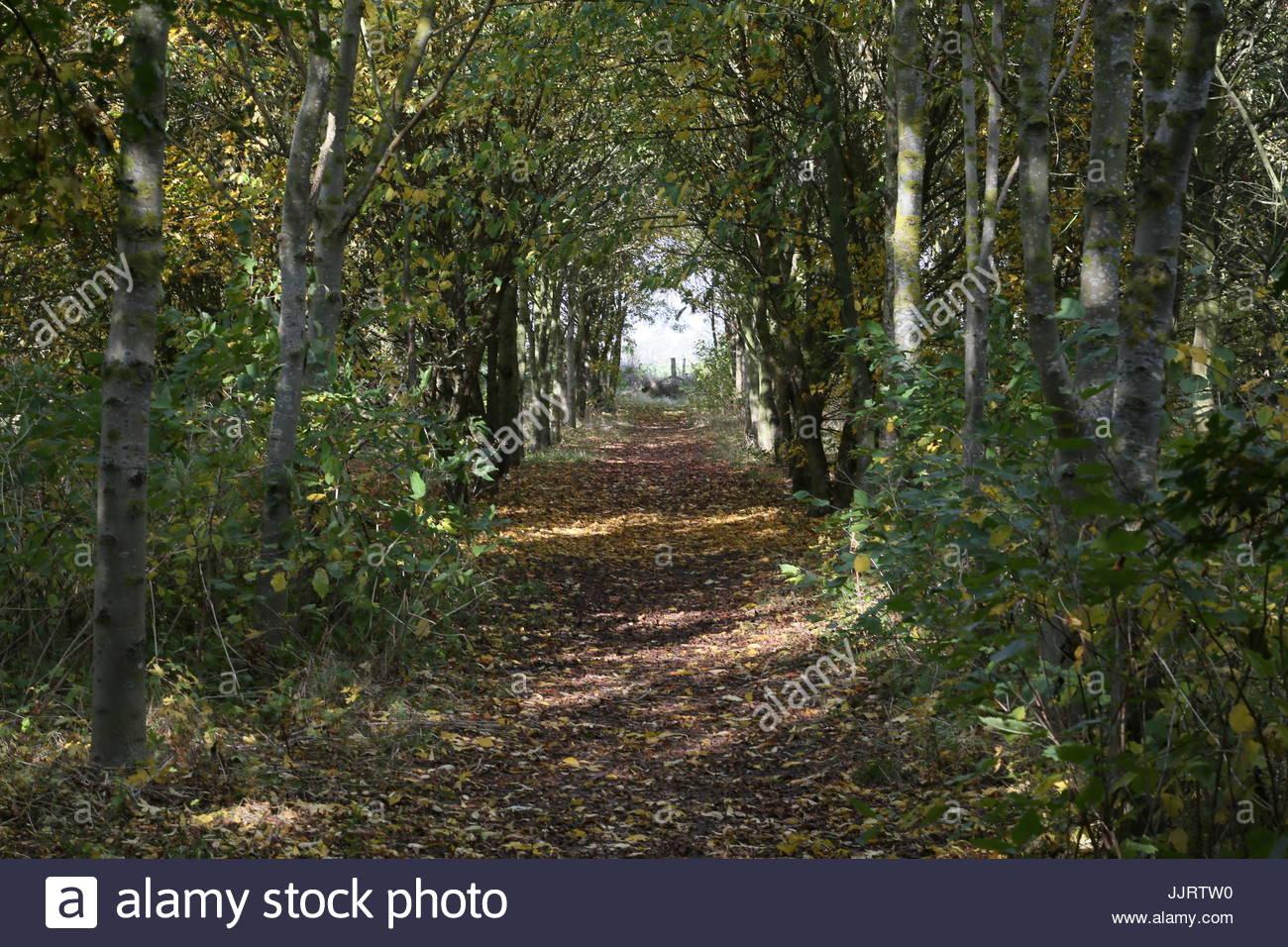woodland walk - Stock Image