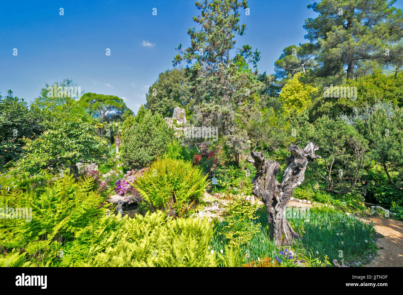 LAKE GARDA ITALY GARDONE THE HELLER GARDEN WITH FERNS AND CONIFER TREES - Stock Image